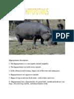 Hippopotamus Descriptions