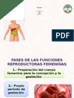 fisiologia femenina