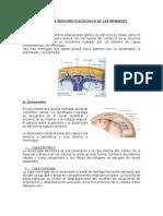 Meningoencefalitis Anatomia