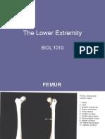 Lower Limb 1
