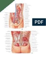 Láminas anatomia