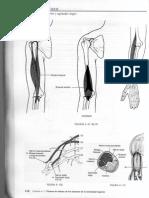 CodoMano1.pdf