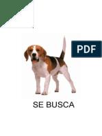 SSE BUSCA-2