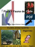 flora-y-fauna-de-chile-1212342229167826-8