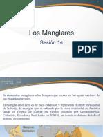 Sesión 19a - El Manglar