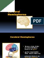 Neuroanatomy Cerebral Hemispheres