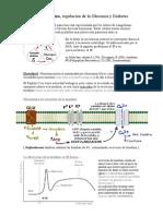 Fisiologia - Endocrino III - Pancreas Endocrino, Regulacion de La Glucemia y Diabetes