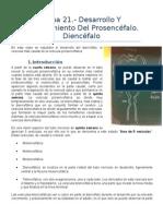 Anatomía III - Tema 21.- Desarrollo y Planteamiento Del Prosencefalo. Diencefalo