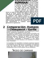 Evolución Humana (1)