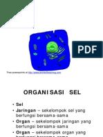 Struktur Dan Fungsi Sel-9