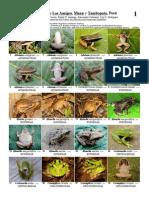 236 Anfibios Amigos 1.2.pdf