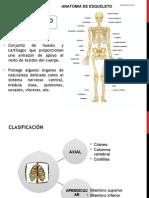 Huesos Del Craneo 2013