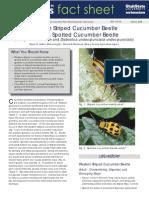 Cucumber Beetle08