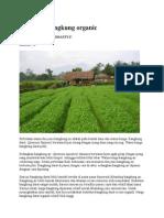 Budidaya Kangkung Organic