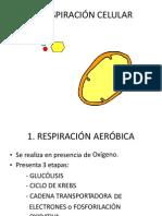 Diapositivas Función de Respiración-resumen