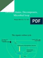 17 Microbial Loop