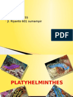 The Real Platyhelminthes