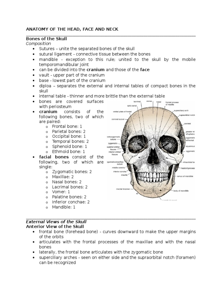 Anatomy of the Head   Skull   Musculoskeletal System