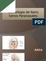 semiologiadesenosparadgnasalesyradiologiayanatomiadesenomaxilar-120902091843-phpapp01