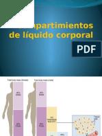 Agua Corporal y Membrana Plamática