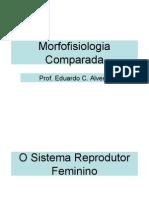 Sistema Reprodutor Feminino e