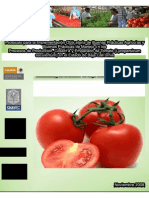 Protocolo de Tomate