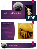 Mite and Termite