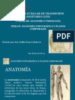 TEMA II planos anatomicos