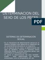 Determinacion Del Sexo de Los Pecesd