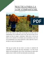 GUÍA PRÁCTICA PARA LA SIEMBRA DE CEMPASÚCHIL.docx
