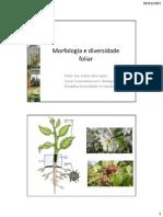 3-Morfologia e Diversidade FoliMorfologia_e_diversidade_foliar.ar