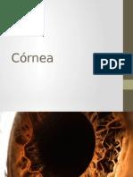Córnea Exposicion