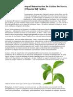 Parcela Practica Integral Demostrativa De Cultivo De Stevia, Para Entrenar En El Manejo Del Cultivo