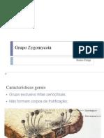282403-DiversidadeFungos.pptx