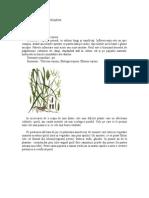 Combaterea Ecologica a Pirului