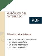 Músculos Del Antebrazo, anatomía 1