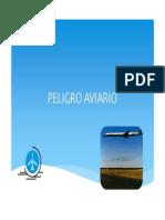 Peligro Aviario en Aeródromo.