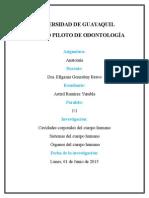CAVIDADES CORPORALES, SISTEMAS Y ORGANOS.docx