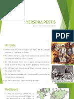 Yersinia Pestis y Neisseria Menigitidis