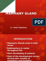 Mammary Gland