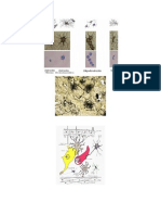 Células de Snc(imágenes)