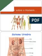 Sistema_urinário e Reprodutor