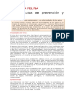 Leucemia Felina - ABCD Pautas de Manejo y Prevencion