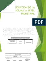 Produccion de La Penicilina a Nivel Industrial