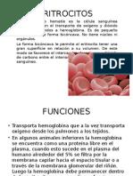ERITROCITOS (1).pptx