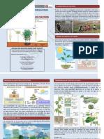 Triptico-NECESIDAD HIDRICA DE LOS CULTIVOS - copia.pdf