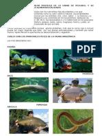 peces amazonicos