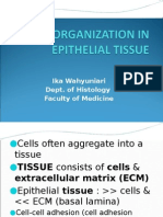 Cell Organization in Epithelial Tissue 2013