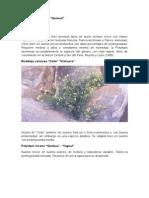 Plantas y Arboles Forestales
