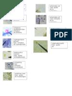 parasiotlogia